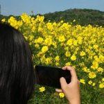 Bunga Refugia Di Wisata Kampung Organik Brenjonk Trawas