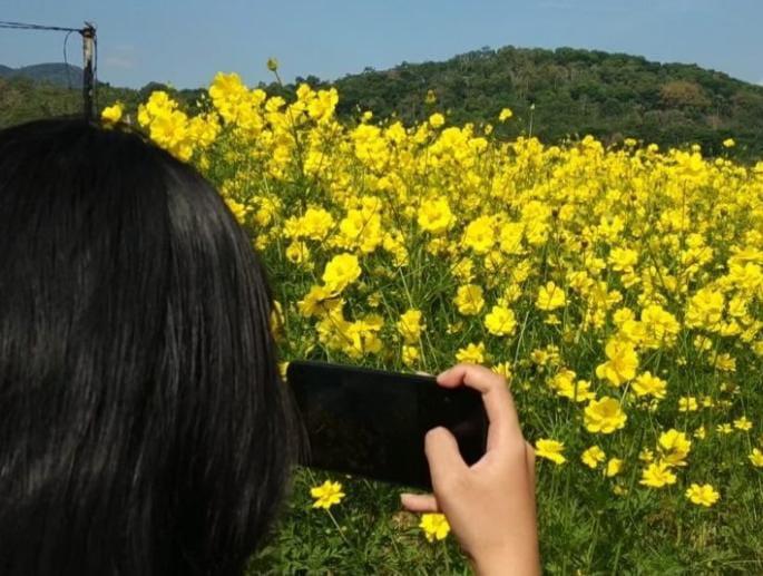 Bunga Refugia Di Wisata Kampung Organik Brenjonk
