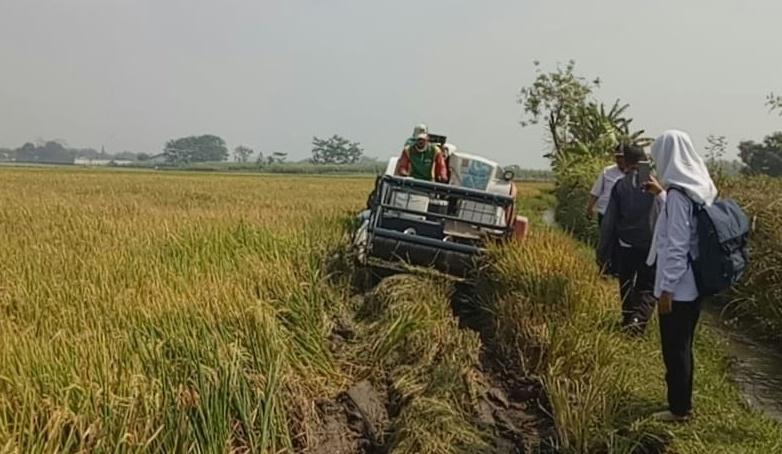 Lahan Pertanian, tidak sesuai rtrw