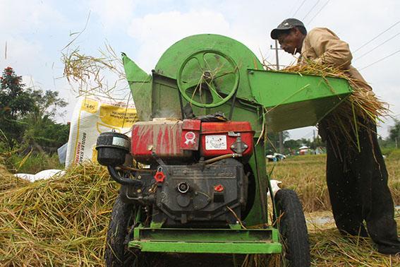 BUMD Bidang Pertanian Digadang Bisa Menjawab Keluhan Petani Terkait Hasil Panen Murah