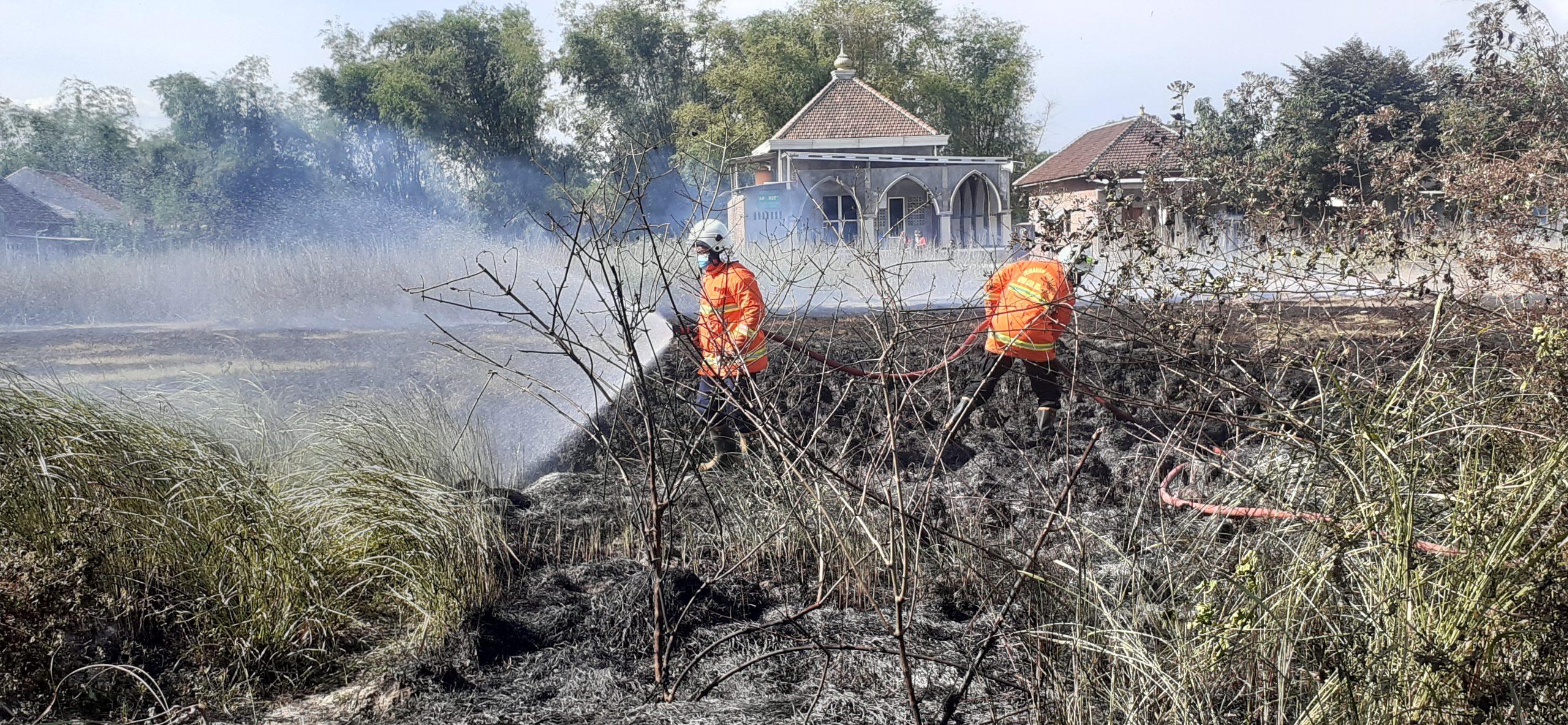 Kebakaran, alang-alang, dua hektar,